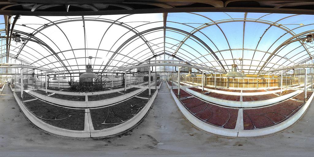 Greenhouse N&B/Color - Pau, France