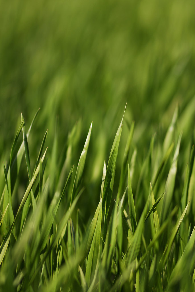 Green grass - Toulouse, France